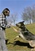 Club canin : Les Bonnes Pattes