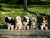 Club canin : Chouky Love
