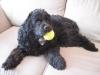 Club canin : AU PAYS D'£NORIA