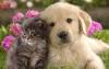Club canin : Amis des Chiens et Chats