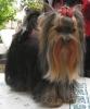 Club canin : Au P´tit Coeurs d\'Amour