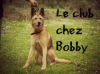 Club canin : le club chez Bobby