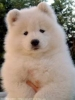 Club canin : Chez Yulu !