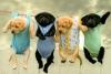 Club canin : Aaaaaaamenez moi vos petits Chiens