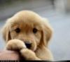 Club canin : DOGGYMOUSSE