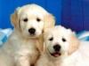 Club canin : chez les chiens