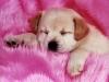 Club canin : Aux 4 pats'