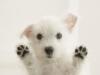 Club canin : les chiens tout mimis