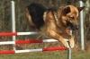 Club canin : Les Ptits Chiens Heureux