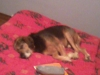 Club canin : coeur en or