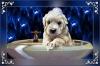 Club canin : Bain de Mousse