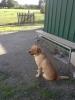 Club canin : gabychou