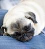 Club canin : mini papate
