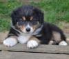 Club canin : Les Calis