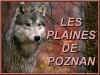 Club canin : Les plaines de Poznan