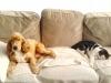 Club canin : le chien et le chat