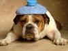 Club canin : Les terres des toutous