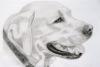 Club canin : Paradis-Canin