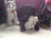 Club canin : Les amoureux des chiens et des chiots