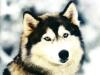 Club canin : Le paradie des Toutou