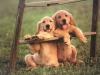 Club canin : Chez les bienheureux