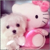 Club canin : Babiiy-Dogzer