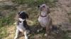 Club canin : Le domaine de Gaffy et Jaïko