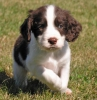 Club canin : ~Le club des toutous heureux~
