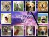 Club canin : Happy Dog~