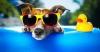 Club canin : Lorette