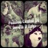 Club canin : Pension Canine Du Jardin D'Enzo