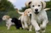 Club canin : Au confort du chien *