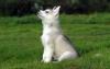 Club canin : La meute d'amour