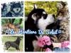 Club canin : ¤ Les Héritiers Du Soleil ¤