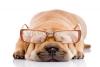 Club canin : Arvorig Love