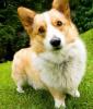 Club canin : Chez lisette34