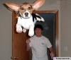 Club canin : Aldora