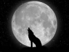 Club canin : Club de la Pleine Lune