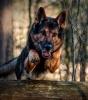 Club canin : des amours de chien