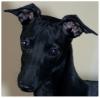 Club canin : Le plaisir des chiens merveilleux