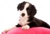 Club canin : ¤ Toutous au Flair et Crocs ¤