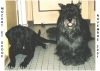 Club canin : Mamourette veille sur les toutous