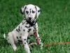 Club canin : Le Club Canin de nos Toutous d'Amours