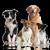 Club canin : Le club du trèfle