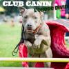 Club canin : Club Canin l'Ordre Divin