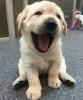 Club canin : clubysdogs