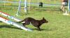 Club canin : Club de l'Yvette