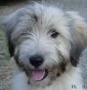 Club canin : Le  Petit Refuge