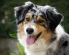 Club canin : Canilux