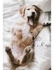 Club canin : Chez Kenya